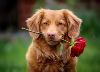 how-dogs-teach-us-about-love